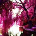 Pink-Trees-pink-color-23859638-2560-1707